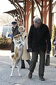 忠犬小八:Hachi_3679.jpg
