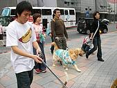 更多狗狗徵婚派對全程實錄:SANY0273