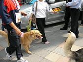 更多狗狗徵婚派對全程實錄:SANY0275