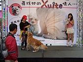 狗狗徵婚派對(20060311):100_0919