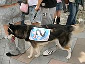 更多狗狗徵婚派對全程實錄:SANY0277