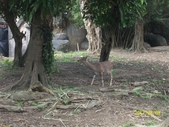快樂的日子:1010408動物園 016.jpg