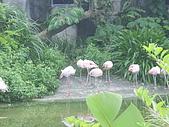 動物園之行:動物園20.jpg