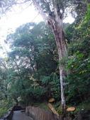 拉拉山國有林自然保護區:巨木區10.JPG