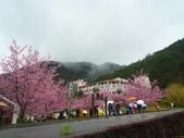 武陵櫻花雨:Ecological Park 生態園區13.JPG