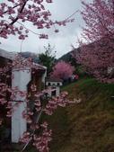 武陵櫻花雨:Ecological Park 生態園區06.JPG