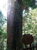 拉拉山國有林自然保護區:巨木區11.JPG