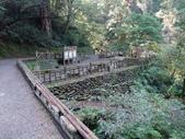 拉拉山國有林自然保護區:巨木區01.JPG
