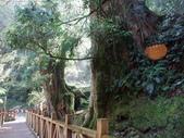 拉拉山國有林自然保護區:巨木區12.JPG