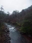 武陵櫻花雨:Chi-Chia-Wan Creek 七家灣溪02.JPG