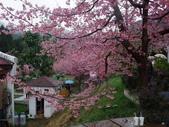 武陵櫻花雨:Ecological Park 生態園區10.JPG