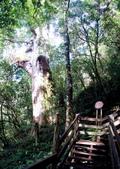 拉拉山國有林自然保護區:巨木區13.JPG