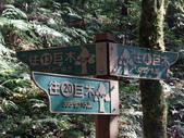 拉拉山國有林自然保護區:巨木區02.JPG