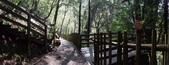 拉拉山國有林自然保護區:巨木區14.JPG