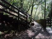 拉拉山國有林自然保護區:巨木區03.JPG