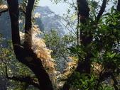 拉拉山國有林自然保護區:巨木區04.JPG
