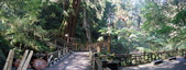 拉拉山國有林自然保護區:巨木區15.JPG