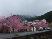 武陵櫻花雨:Ecological Park 生態園區08.JPG
