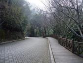 拉拉山國有林自然保護區:前往巨木區.JPG