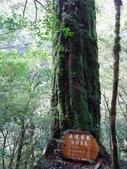 拉拉山國有林自然保護區:巨木區05.JPG