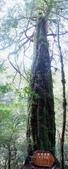 拉拉山國有林自然保護區:巨木區16.JPG