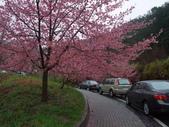 武陵櫻花雨:Ecological Park 生態園區11.JPG