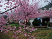 武陵櫻花雨:Ecological Park 生態園區02.JPG