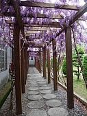 武陵農場-紫藤花:2009_0322177.JPG