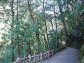拉拉山國有林自然保護區:巨木區17.JPG