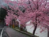 武陵櫻花雨:Ecological Park 生態園區05.JPG