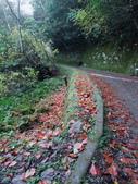 拉拉山國有林自然保護區:巨木區07.JPG