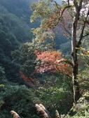 拉拉山國有林自然保護區:巨木區18.JPG