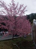 武陵櫻花雨:Ecological Park 生態園區09.JPG