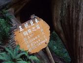 拉拉山國有林自然保護區:巨木區08.JPG