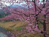武陵櫻花雨:Ecological Park 生態園區12.JPG