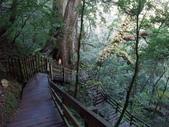 拉拉山國有林自然保護區:巨木區09.JPG
