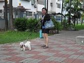 未分類相簿:可愛的狗狗