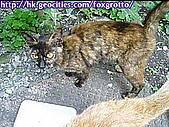 後院野貓:20070413_cat_oni_01