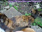後院野貓:20070413_cat_oni_02
