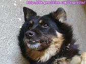 食客小黑:20070114kuro_08