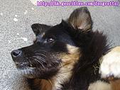 食客小黑:20070114kuro_09
