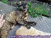 後院野貓:20070413_cat_oni_03