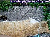 後院野貓:20070413_cat_ooki_05