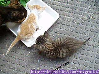 後院野貓:20070420_cat_onikazoku_02