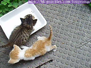後院野貓:20070420_cat_onikazoku_04