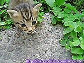 後院野貓:20070420_cat_onikazoku_05