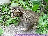 後院野貓:20070420_cat_onikazoku_06