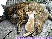 後院野貓:20070420_cat_onikazoku_08