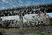 鴿子:a 062