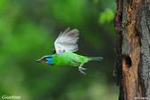 2年沒拍5色鳥了:DSC_7049+.jpg